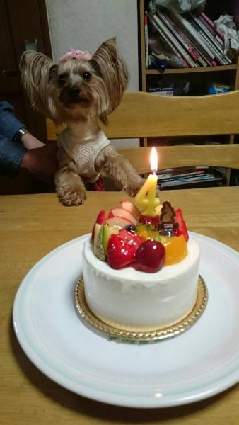 ケーキと凜ちゃん