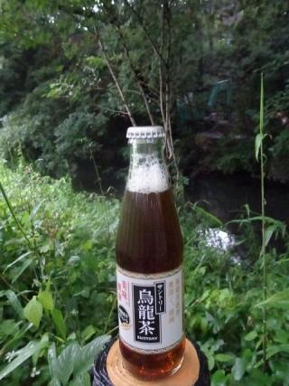 瓶烏龍茶 (5)