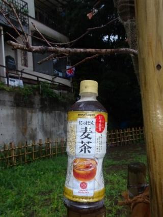にっぽん麦茶 (2)