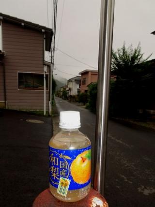 和梨ソーダ (5)