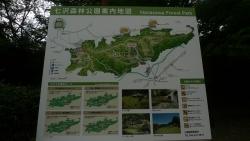 20170611七沢森林公園1