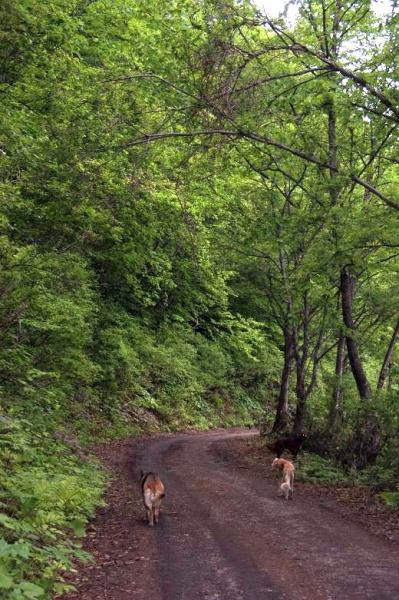 初夏の森14