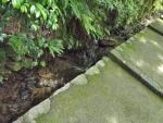 白山比咩神社15