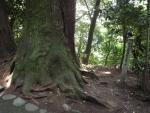 白山比咩神社19