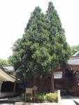 白山比咩神社36