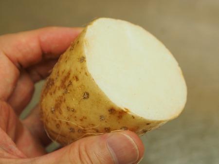 サーモンと長芋のしょう油麹添022