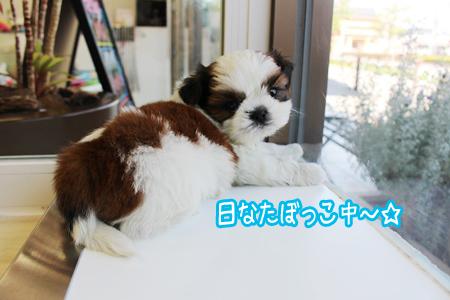こわんこ日記 最新仔犬情報 子犬