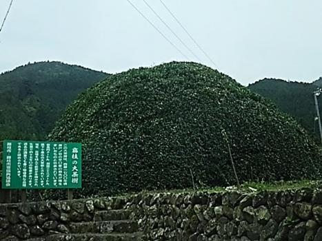 DSC_0835.jpg