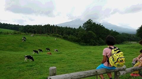 浅間牧場の牛たち