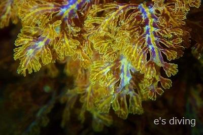 2017.8.4海藻blog