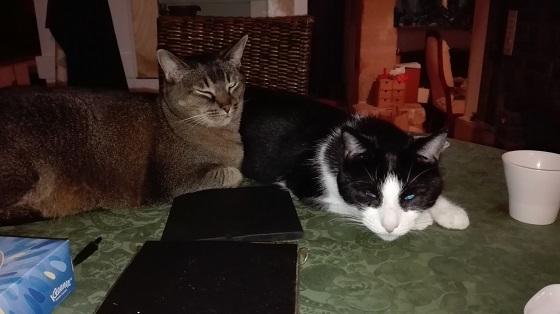 タマとリュリュ