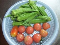 オクラとミニトマト