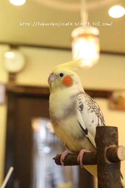 ぽーちゃん2