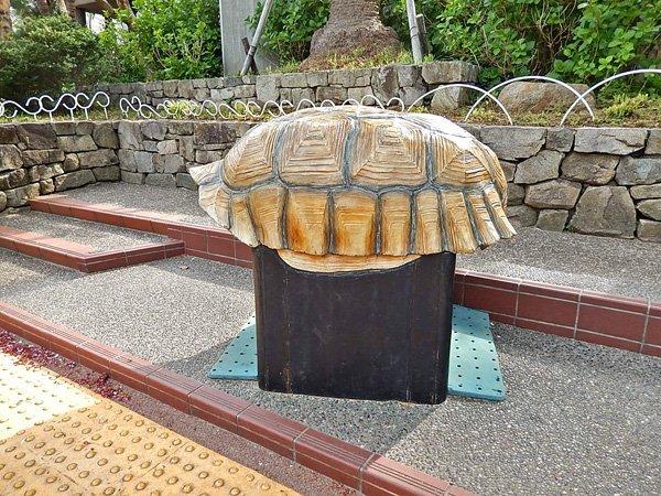 ケヅメリクガメの甲羅