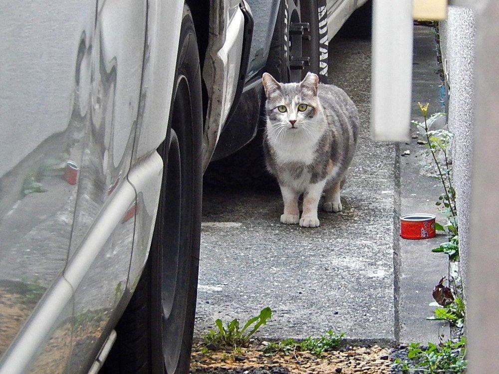 もふもふ猫