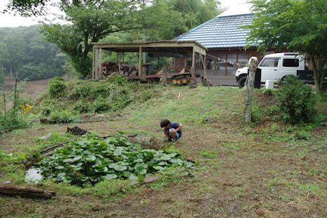 庭のイモリ池