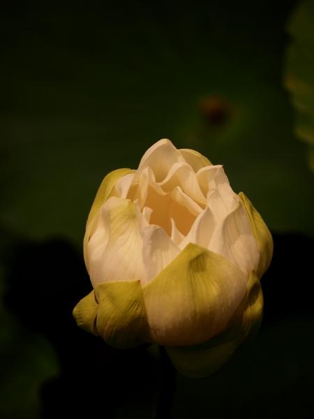 P7160015.jpg