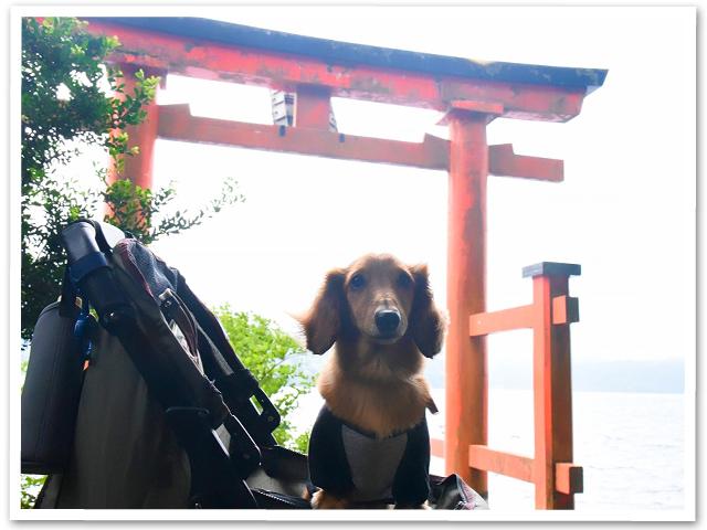 箱根ぷち旅行①