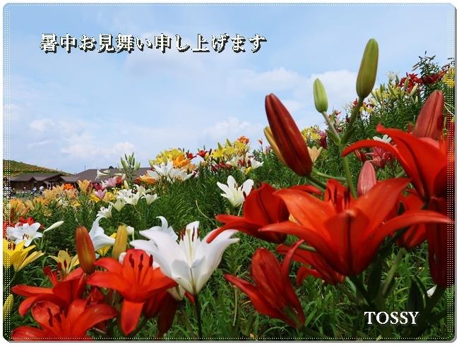 箱館山ユリ園暑中見舞い