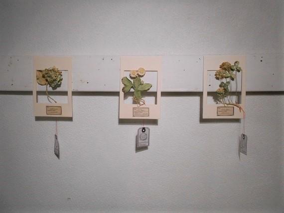 精密紙植物展