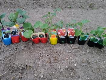 20170503夏野菜