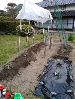 20170503夏野菜畑
