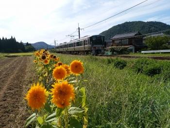 20170903ひまわりと電車