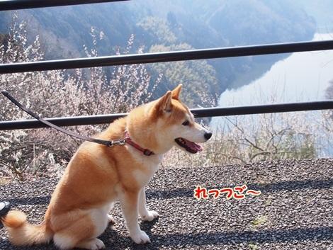梅林散歩♪