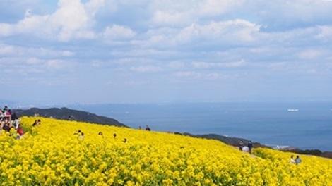 空と海と菜の花