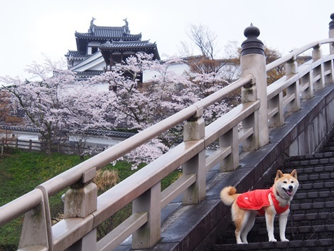 福知山城にて