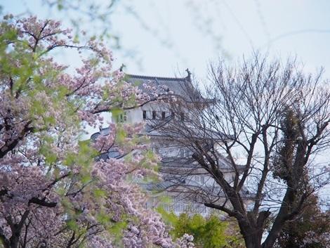 ちら見え姫路城