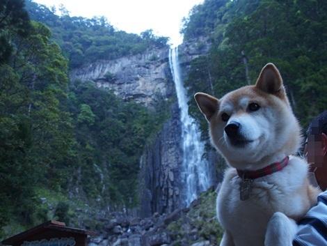 那智大滝とさくら