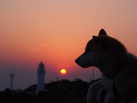 夕日とさくら