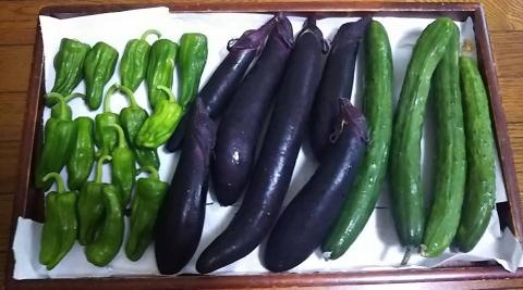 平成29年7月4日野菜