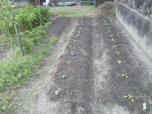 野菜植え2