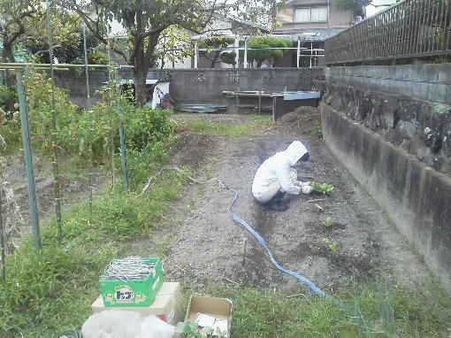 野菜植え1