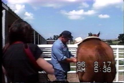 馬とカメラマン