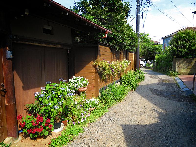 170617,鎌倉の路地裏の紫陽花7
