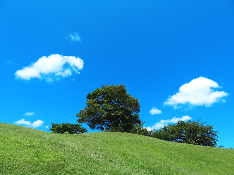 170721榎の丘、夏1
