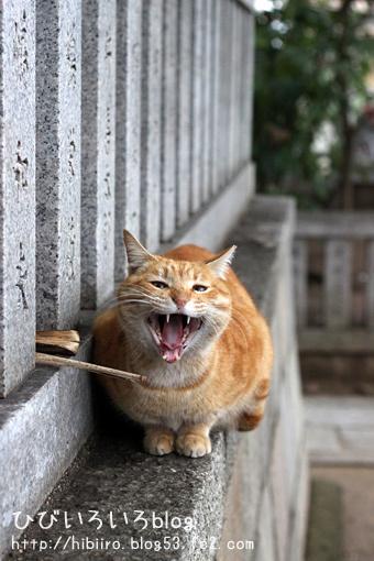 猫写2017(039)