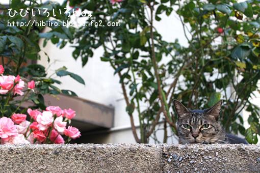 猫写2017(041)