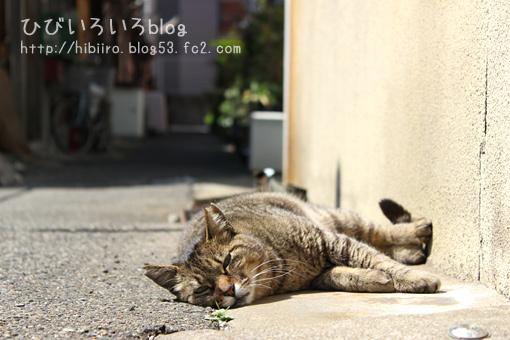 猫写2017(044)