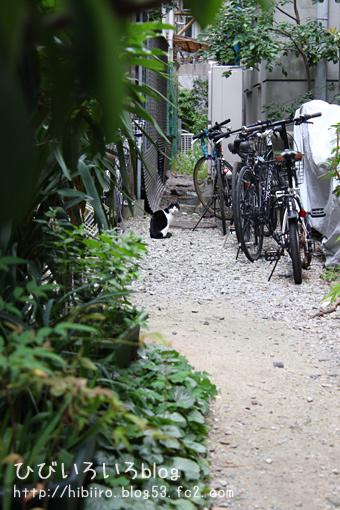 猫写2017(045)