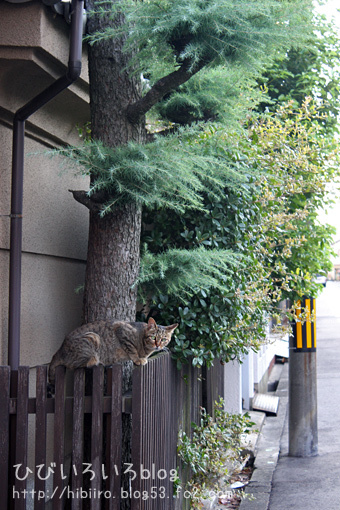 猫写2017(049)