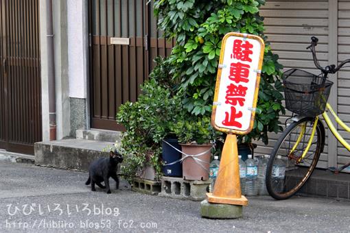 猫写2017(051)
