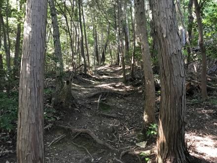 170914mirokusan trailrunning (2)