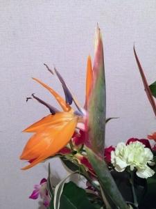 ストレリチア(極楽鳥花)