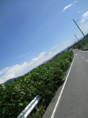 IMG_7133.jpg