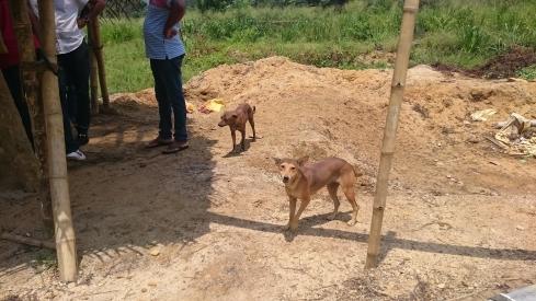 20170519宝石採掘現場のワンコ
