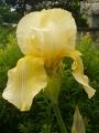 2017年の春の花1